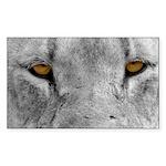 Lion Eyes Sticker (Rectangle 10 pk)