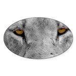Lion Eyes Sticker (Oval)