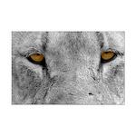 Lion Eyes Mini Poster Print