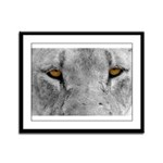 Lion Eyes Framed Panel Print
