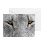 Lion Eyes Greeting Cards (Pk of 10)