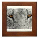 Lion Eyes Framed Tile