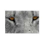 Lion Eyes Rectangle Magnet (100 pack)