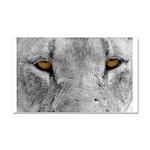 Lion Eyes Car Magnet 20 x 12