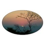 Phinda Sunset Sticker (Oval 50 pk)