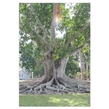 Bis Sunny Tree