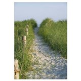 New England Coastal Dune Path