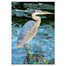 Cute Heron Wall Art