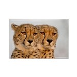 Cheetahs Rectangle Magnet (100 pack)
