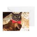 FPG Xmas Cat VII Greeting Cards (Pk of 20)
