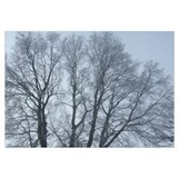 Large tree in winter - photo print