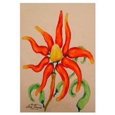 Hot Pepper Lily