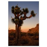 - featuring Joshua Tree