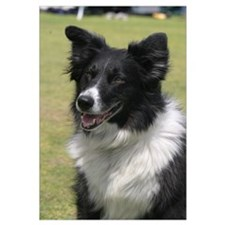 Cute Collie puppy Wall Art