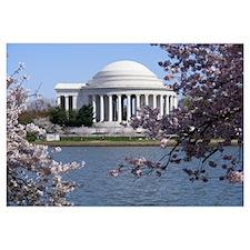 Cool Washington dc cherry blossom Wall Art