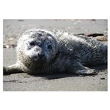 Funny Harbor seals Wall Art