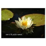 serenity series, waterlily