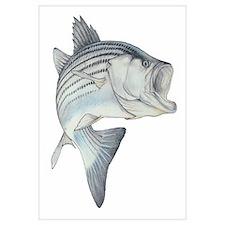 Lunker's Stripe Bass