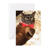 FPG Xmas Cat SPANISH Greeting Cards (Pk of 20)