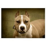Funny Pitbull sayings Wall Art