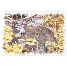 Fall Buck