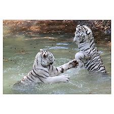 -Tigers