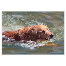 Golden Retriever - The Swimme