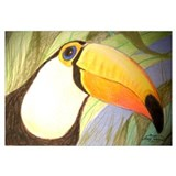 Toucan