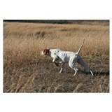 Cute English pointers Wall Art