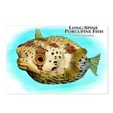 Long-Spine Porcupine Fish Postcards (Package of 8)