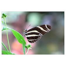 Helaine's Butterfly