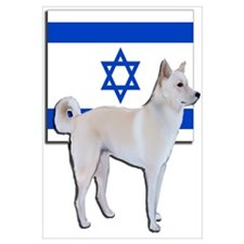 Canaan dog of Israel