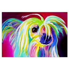 Chinese Crested #2