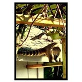 """COATI IN GRAPE ARBOR"""