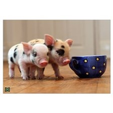 Funny Teacup pig Wall Art