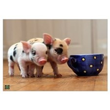Cute Tea cup pigs Wall Art