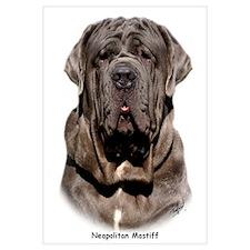 Neapolitan Mastiff 9Y393D-047