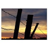Barbwire Fence Sunset