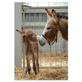 - Miniature Donkey and Foal