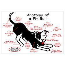 Pitbull Anatomy