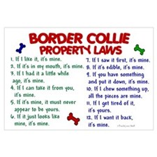 Border Collie Property Laws 2