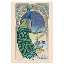 Pavo the Peacock