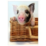Cute Pig on the farm Wall Art