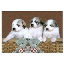Great Pyr Puppy Trio<br>