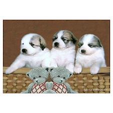 Great Pyr Puppy Trio<br>