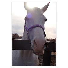 Vailiant Horse
