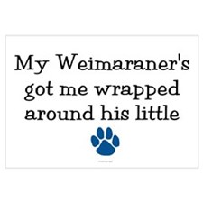 Wrapped Around His Paw (Weimaraner)