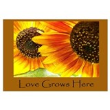 Love Grows Here Sunflowers