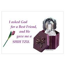 Shih Tzu (White, Black, Gray)