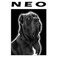 Neopolitan Mastiff (Dog) B&W